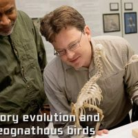 Image showing four researchers gathered around the skeletons of small flightless birds.